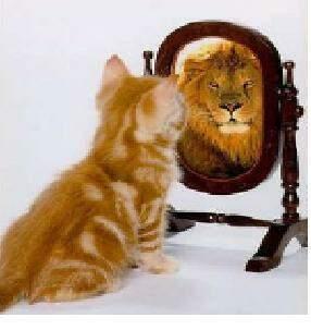 Reflexo Do Leao Versus Gatinho